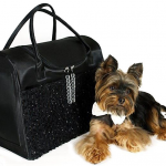 Yorkie-with-Black-Party-Bag